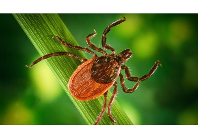 Integrative approach in diagnostics and treatment of Lyme Disease and Chronic Fatigue Syndrome